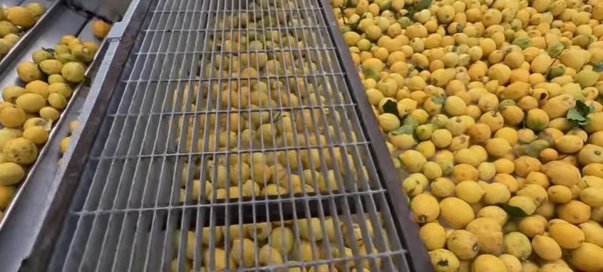 Lemon Oil Extraction