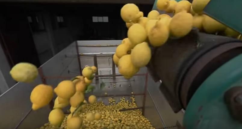 Production of lemon essential oil